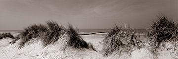 Dünen an der Nordsee sur Hans Albers