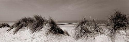 Duinen aan Noordzee van