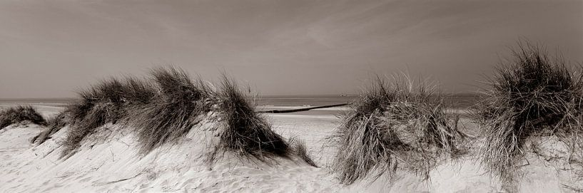 Duinen aan Noordzee van Hans Albers