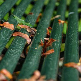 Herfstbladeren op een bankje in het bos in closeup van Joyce Derksen