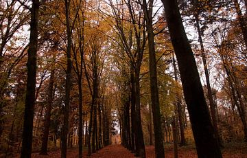 Herfst in het bos von Fatima Maria Mernisi