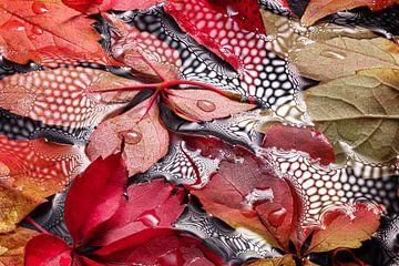 herfstbladen op natte ondergrond me waterdruppels van Heinz Trebuth