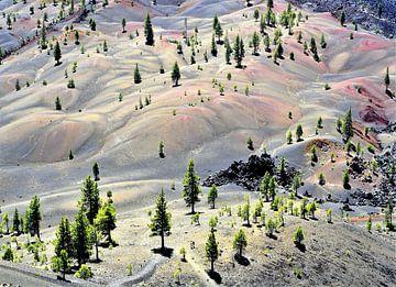 Bemalte Dünen von Xaverius Van den berg