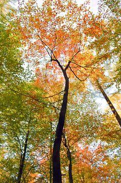 kleurrijke bomen van Karin vanBijleveltFotografie