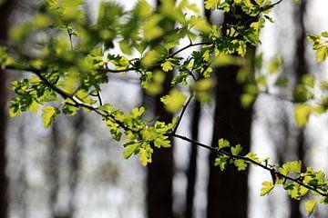 Wald im Frühling sur Renate Knapp