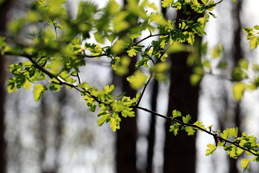 Wald im Frühling van Renate Knapp