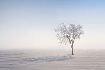 Ombre Nordique von Renald Bourque