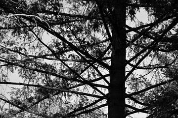 Labyrinth von Zweigen von Marije Zwart
