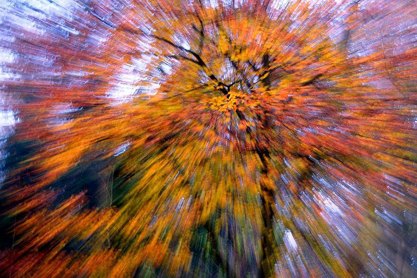 herfst explosie van Niels  de Vries