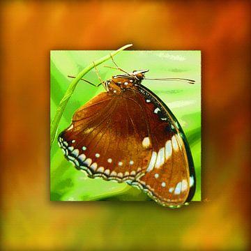 Vlinder... Palmvliegen. van Dirk H. Wendt