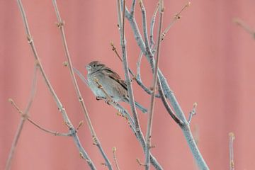 Huismus voor Rorbuer | Foto print Noorwegen | Vogelfotografie van Dylan gaat naar buiten