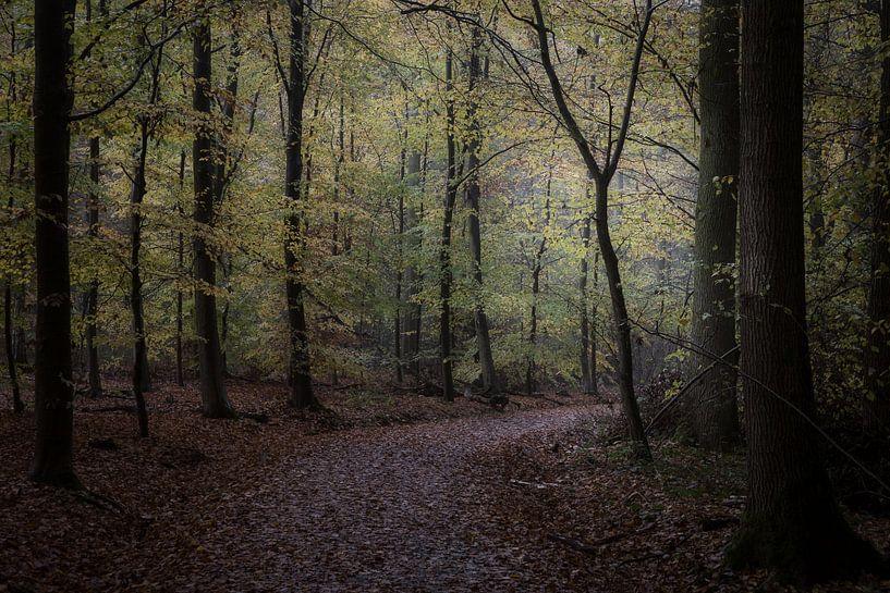 la forêt d'automne sur Koen Ceusters