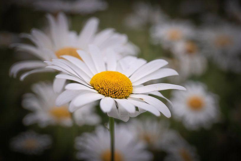 Flower van Wim van D