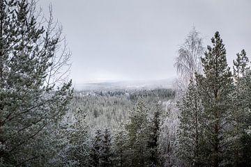 Koude mist van Marco Lodder