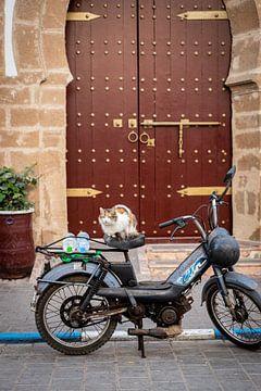 Een kat op een motor voor een Marokkaanse deur van Ellis Peeters