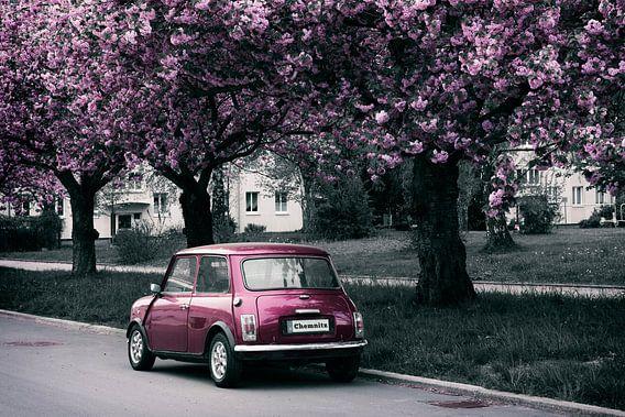 De Mini en de kersenbloesem