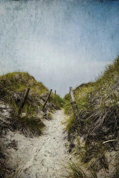Durch die Dünen