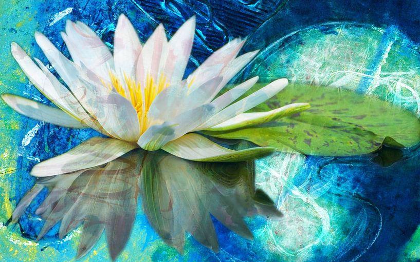 Lotus Bloem van Giovani Zanolino