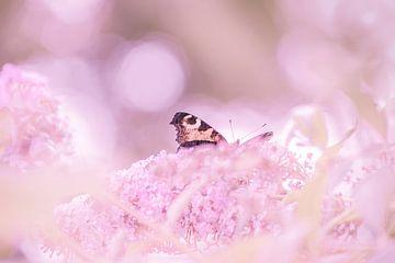 Schmetterling auf Schmetterlingsbaum von Caroline Drijber