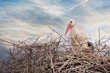 Ein Storch steht im Nest, blauer und weißer Himmel im Hintergrund. Grußkarte, Geburtsanzeige, Geburt von Gea Veenstra
