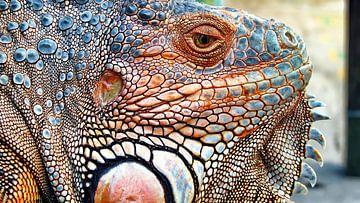 Nahaufnahme eines Leguans von Eduard Lamping