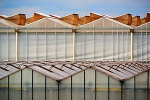 Dutch Greenhouse looking like an organsism