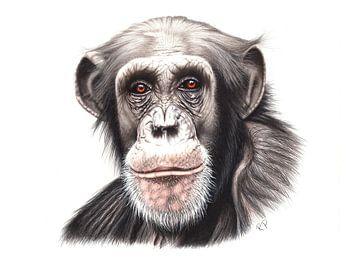 Chimpansee van Renate Postma