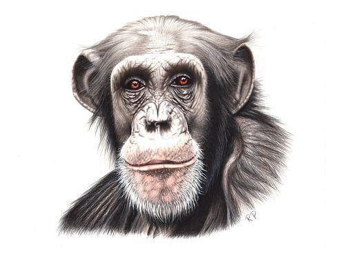 Chimpansee von Renate Postma