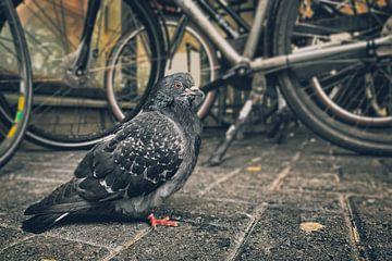 Le pigeon sur Elianne van Turennout