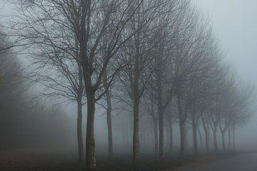 Marcheren in de Mist