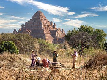 Myanmar - Bagan - Weinlese vor einer Pagode von Rik Pijnenburg
