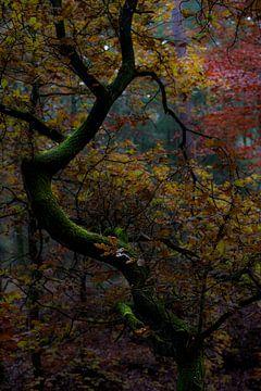 Een kronkelige boom in verschillende herfstinten, van Kelvin Middelink