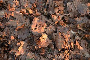 Herfst van Jeroen van Breemen