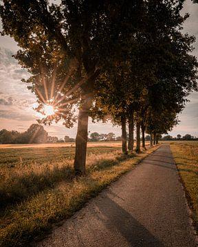Allee im Sonnenuntergang von Steffen Peters