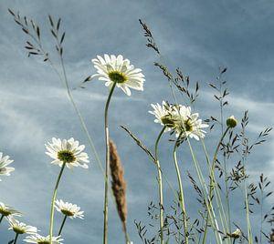 Velden vol bloemen van Annelies Martinot