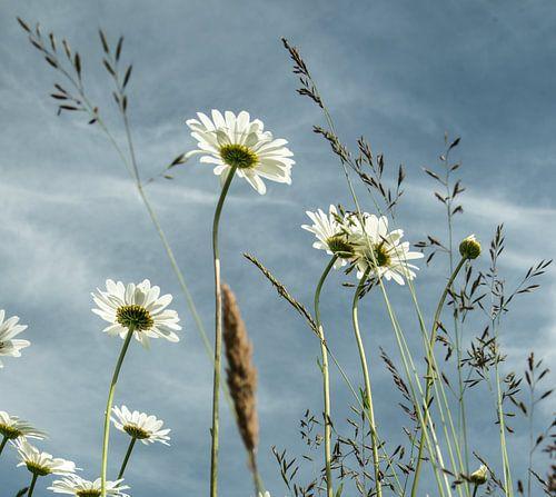 Felder mit Blumen
