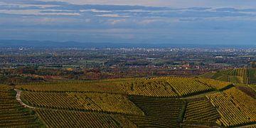 Vergezicht over de Rijnvallei met Straatsburg en de Vogezen over de wijngaarden van Durbach in de he van Timon Schneider