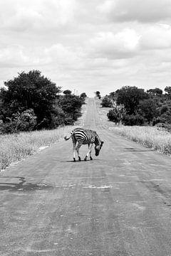 Overstekende zebra in Timbavati Zuid-Afrika van Nathalie Wilmsen