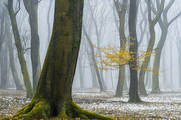 Die Farben des Winters von Lars van de Goor