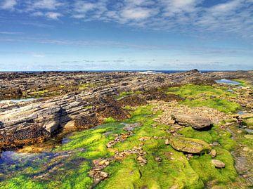 Grüner Meeresgrund bei Ebbe von Mathieu van den Berk