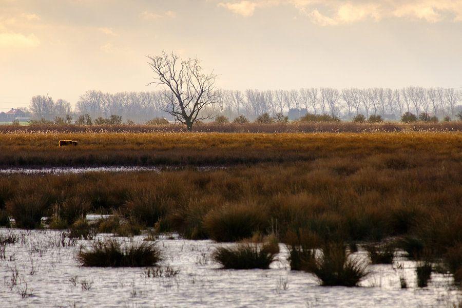 Waterlandschap Tiengemeten