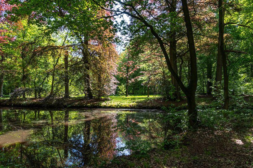 Sonnenstrahlen im Liesbos, Breda von Ingrid Aanen
