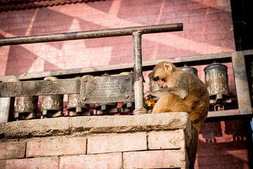 Aapje in de apentempel Swayambhunath van Ellis Peeters