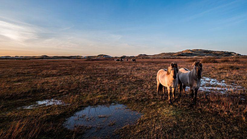 Love Horses van Wad of Wonders