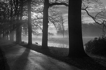 Mistige zon opkomst  von Hans Jonker