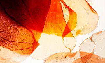 Licht magie - Ham van Erich Krätschmer