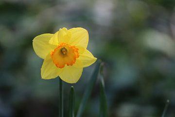 Frühling von Ellen Kloet