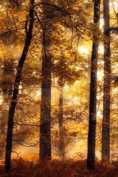 Bunter Herbst von Thomas Jansen
