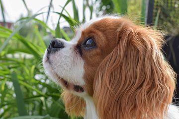 Starende hond. van Chloe 23