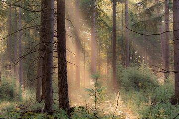 rayons de soleil dans la forêt sur Tania Perneel